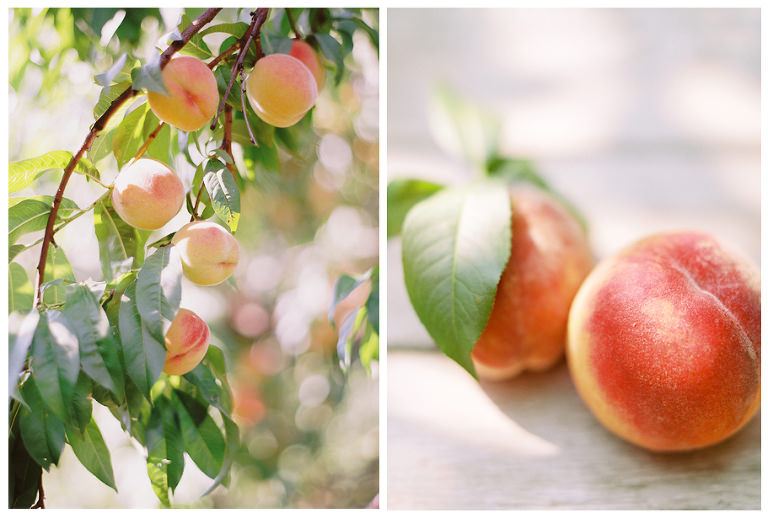 peaches dyptic 1